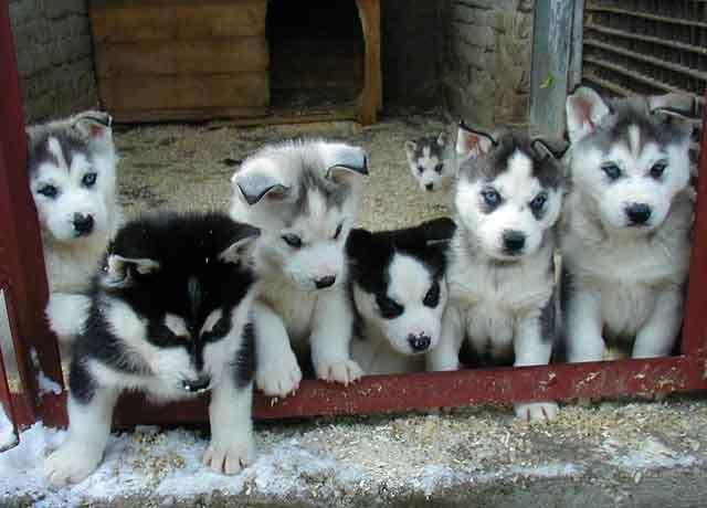 venta de mascotas el salvador: